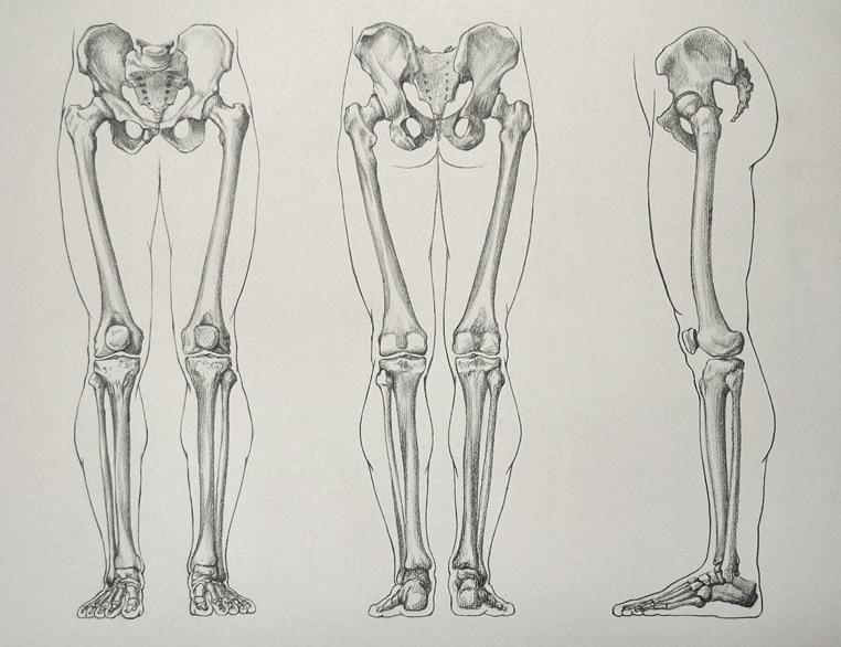 leg_bones